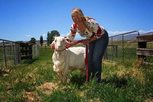 shrek-the-sheep-79