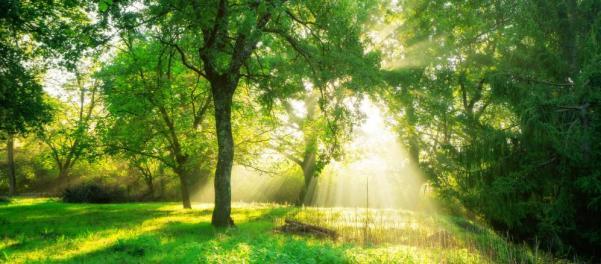 Photo Forêt et rayons lumineux du lever du soleil