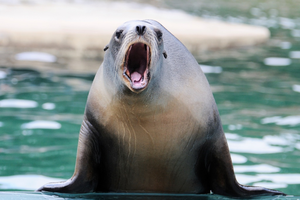 Breathe Like a SEAL to Beat Migraines
