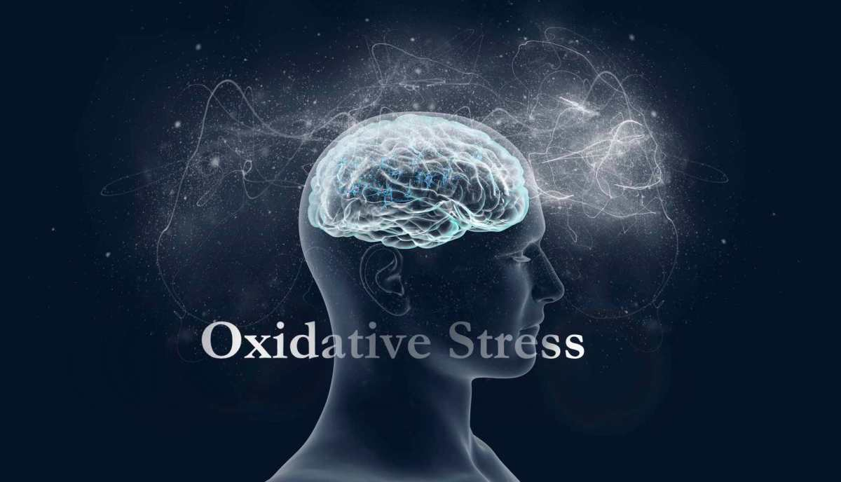 Image result for oxidative stress