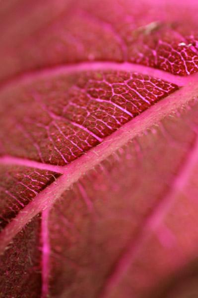 Migrate Design Photography Leaf