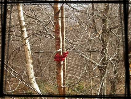 Fotografie di trappole per uccelli e mammiferi