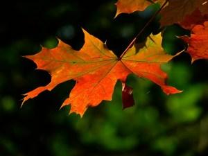 autumn 196566 640 - autumn-196566_640