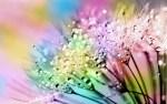 flora 3069865 640 - wave-1246560_1920