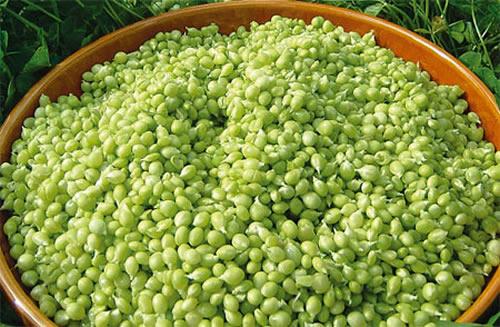 Guisante Lágrima de costa - Caviar vegetal