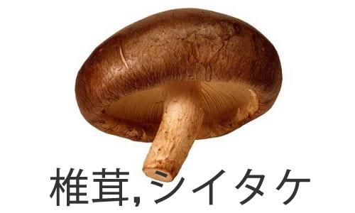 Salsa de setas Shiitake