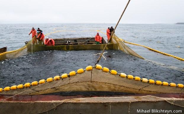 Sockeye Salmon Set (Trap) Net Fishery