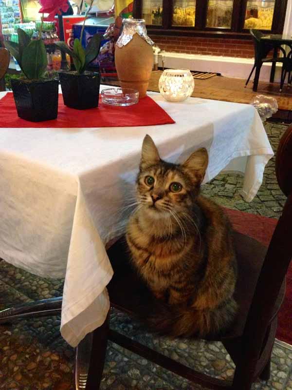 Kis-kis-kis. Näitä oli lähes joka ravintolassa seurana. Ja kyllä me osalle jotain pientä vahingossa tiputettiin. ;)