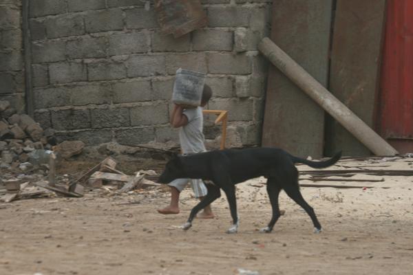 Kyllä ne lapsetkin töitä tekivät. :) Lapsia parveili kaduilla ihan keskenäänkin ja ihan pieniäkin tyyppejä. Autoilijat osasivat niitä ja koiria hyvin väistellä.