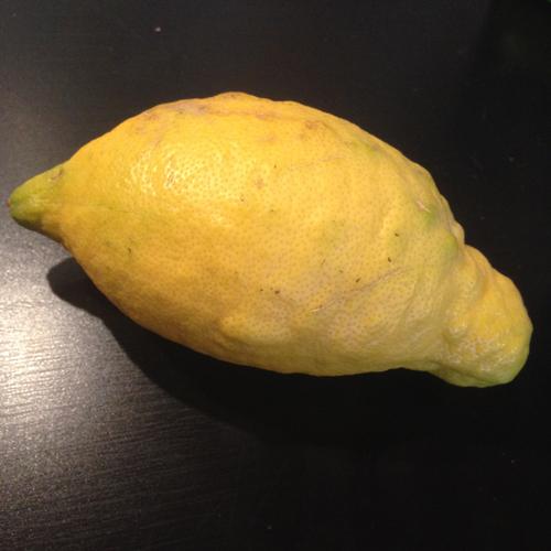 Eka maahan tippunut sitruuna. Kai se sitten tuli kypsäksi, kun omia aikojaan tipahti. :) On ainakin hyvän kokoinen hedelmä.