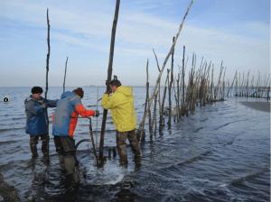 culinaire traditie: weervissers Bergen op Zoom