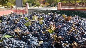 Ecologische wijn Yecla en Jumilla