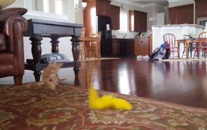Grappige katten compilatievideo