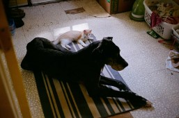 Cats and dogs living together, it's mass hysteria!