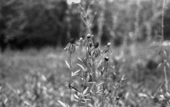 Another bokeh image.