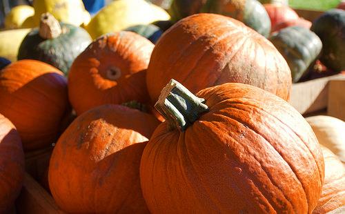 Eats of Autumn: My Favorite Seasonal Foods