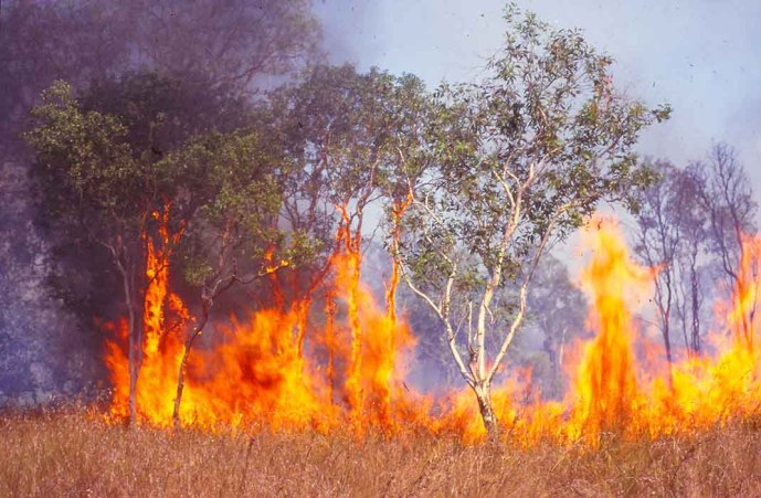 Fire in Australian savanna
