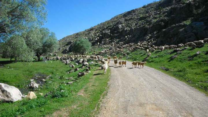 Almost at our lease, we come across a sheep dog leading a flock. The green area off to our left is a popular picnic spot, and we would always slow down to avoid creating any dust.