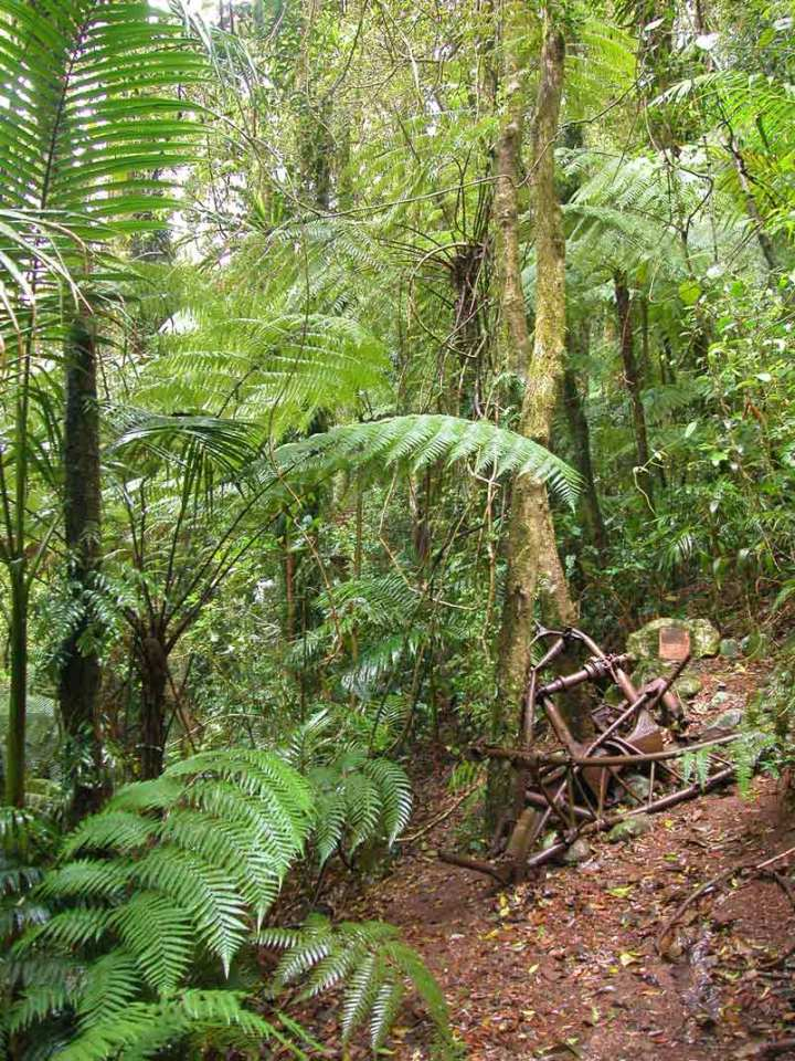 First sight of the Stintson wreck - a pile of metal in thick rainforest.
