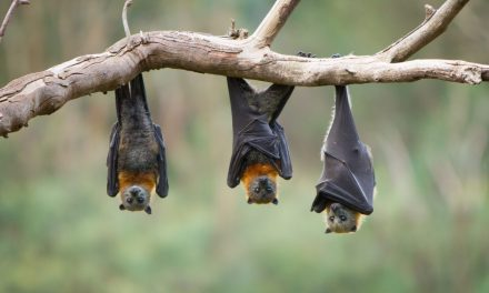 Action to carefully remove bat nest from Church Hill residential development site
