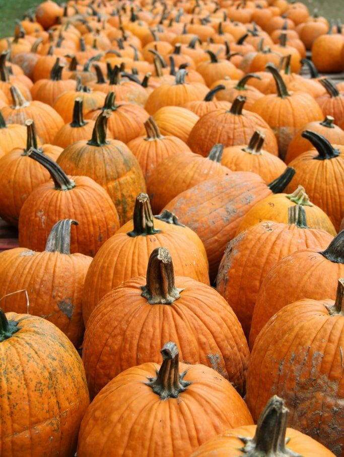 Pumpkin Seed Planting Event