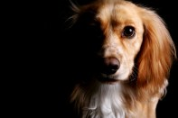 pet photoshoots at MIke Turner Photography