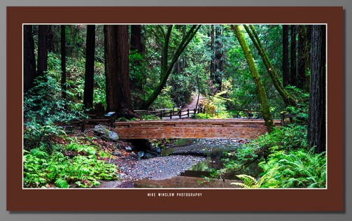 "This one is hanging on my wall, about 48"" with the frame. Shot in Muir Woods, California on a drizzly Monday. Worked out because no too many tourists messing up the scene."