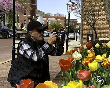 Photographer photographing tulips.