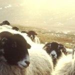 Sheep's Wool, Hemp & Supaloft
