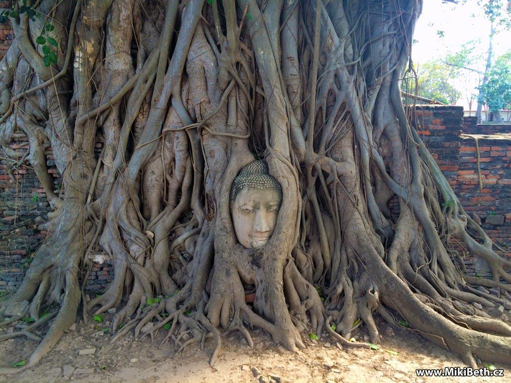 Buddhova hlava zarostlá v kořenech