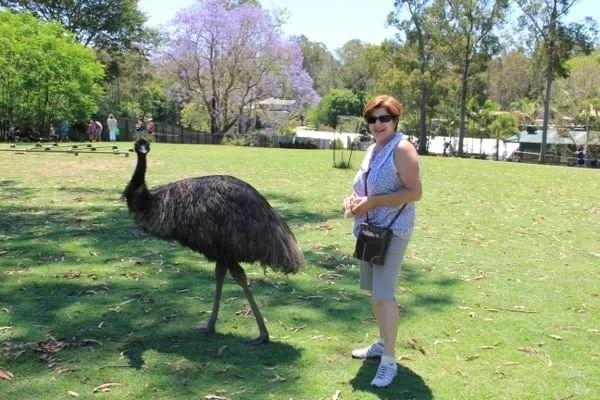 Ema na Australia por mikix