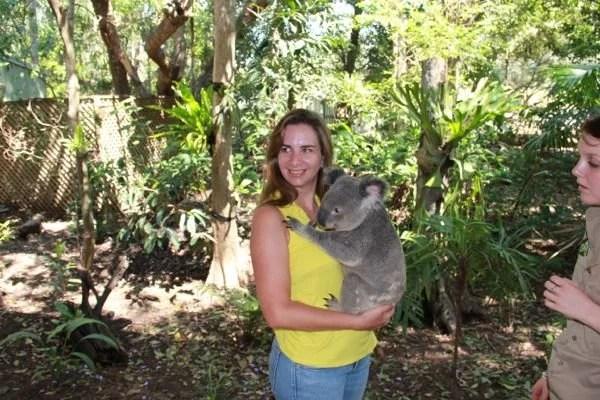 Coala na Australia por mikix