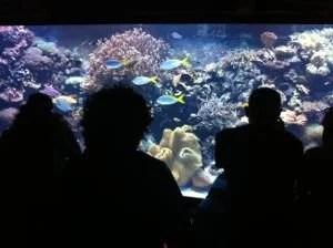 Downtown Aquarium em Houston
