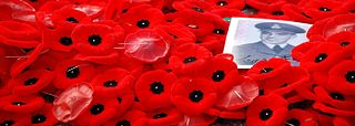 Poppies do Remebrance Day