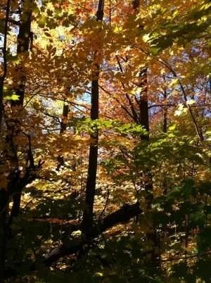 Amarelo do outono