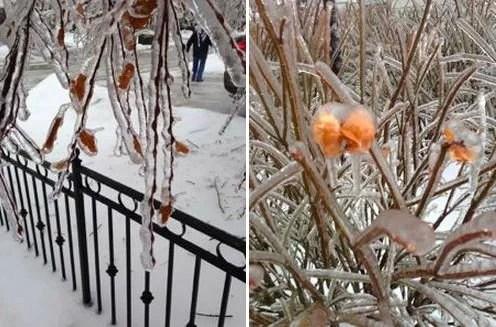 Tempestade de gelo em Toronto