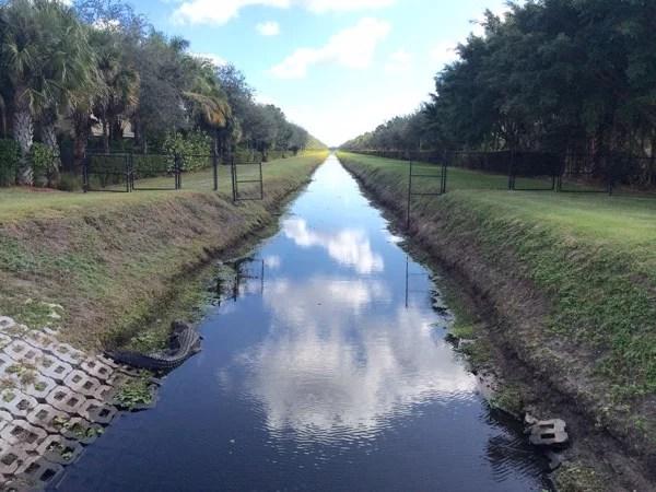Jacaré na Florida