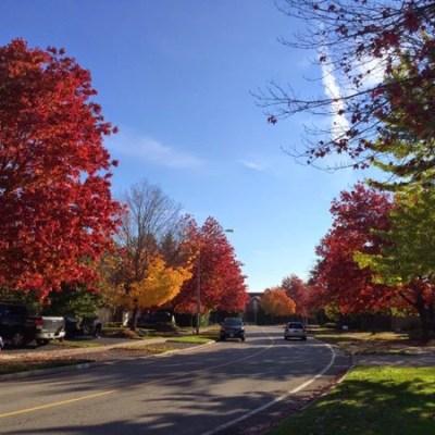 Outono em Toronto