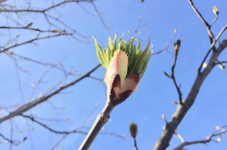 Primavera em Toronto