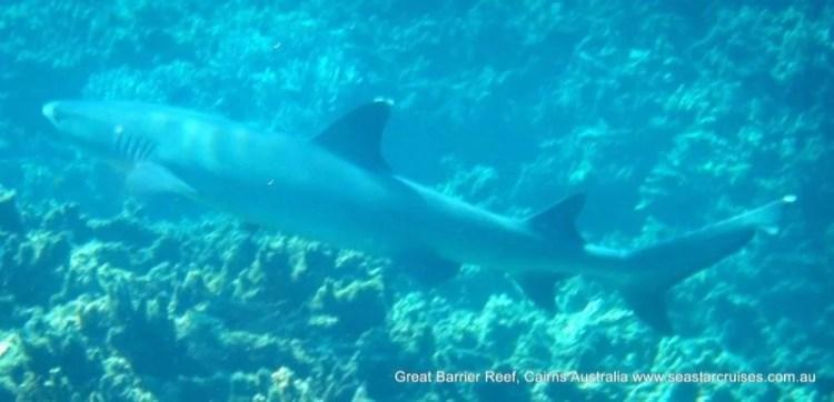 Snorkel Barreira de Corais Australia