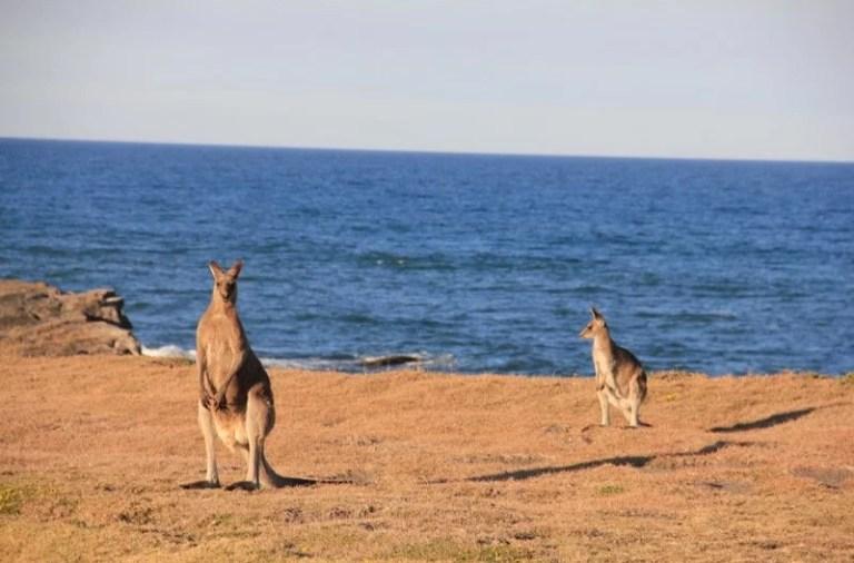 Australia Day, comemorar ou não?