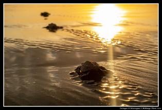 [2020-03-09] Tortuga - 19