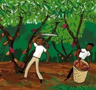 Kakaobønder i Den Dominikanske republik.