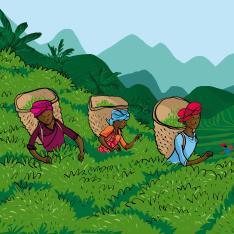 Tebønder fra Malawi og Kenya
