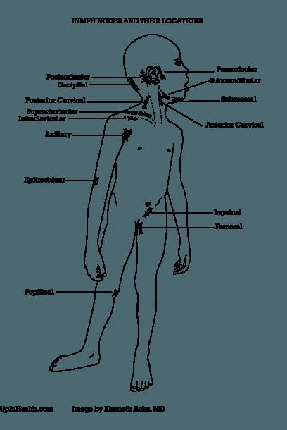 Groin Lymph Nodes Location Diagram