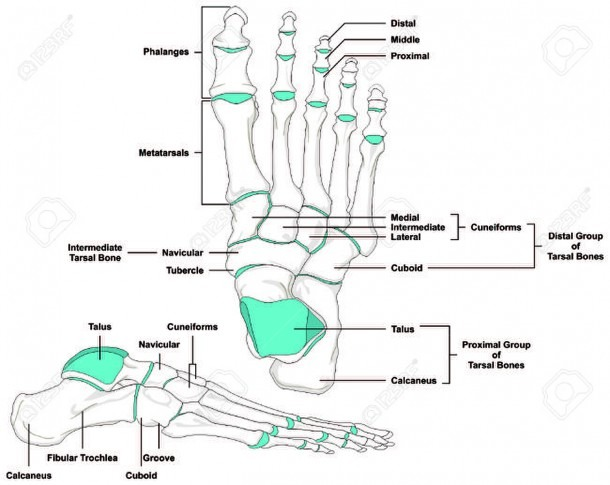 Anatomical Position Diagram