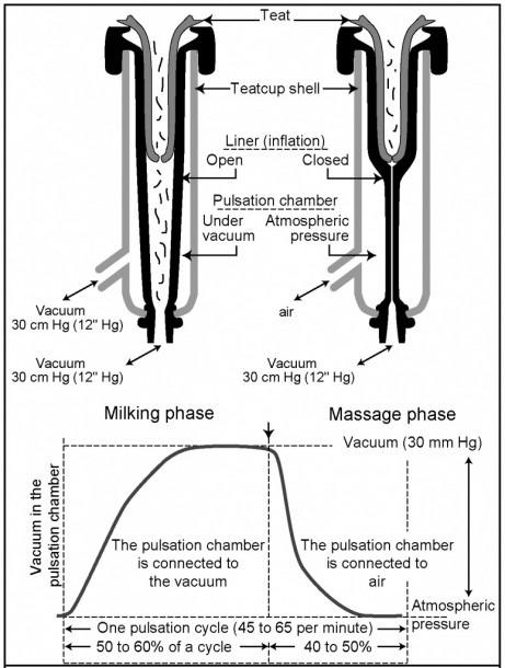 Diagram Of Milking Machine