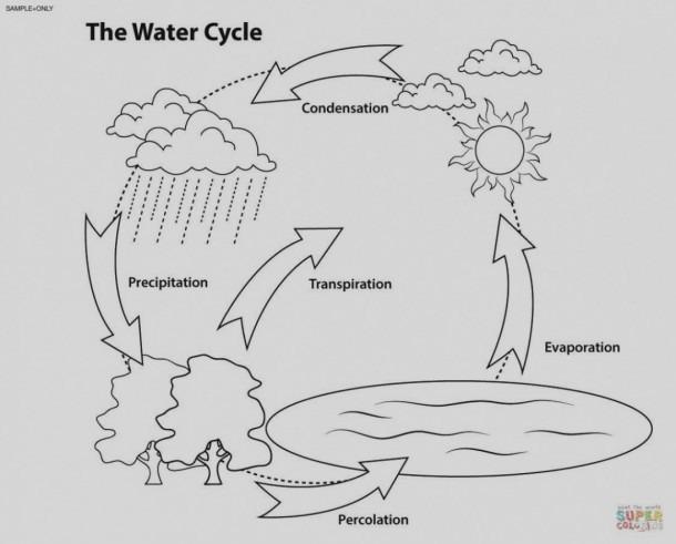 Blank Water Cycle Diagram Printable