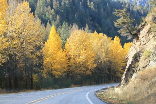 Outono em Seattle e Estado de Washington