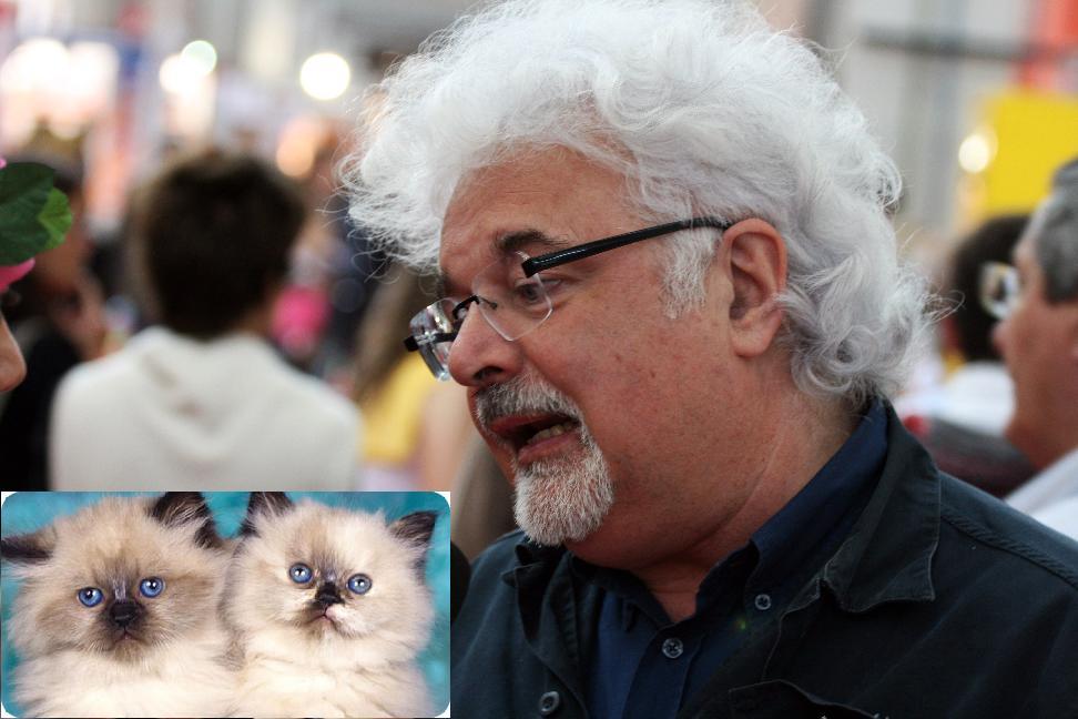 Gatti e Roversi